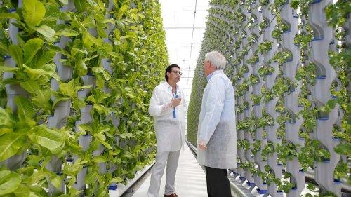 Vertical Indoor Farms Make Sense