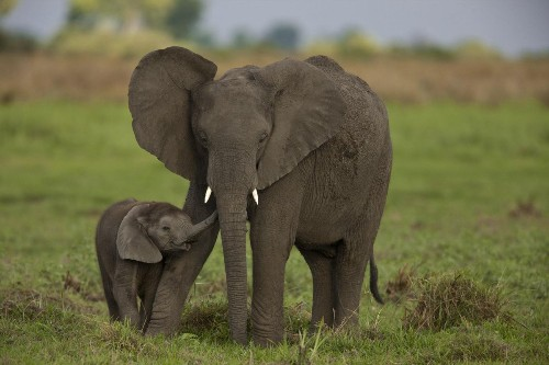 Before Your Next African Safari: An Urgent Need To Protect Wildlife Now