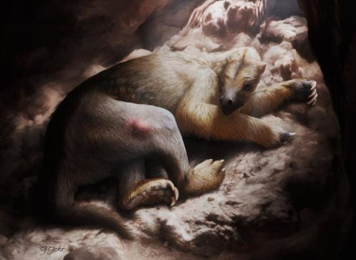 Scientists Report First Case Of Cancer In An Extinct Non-Human Mammal