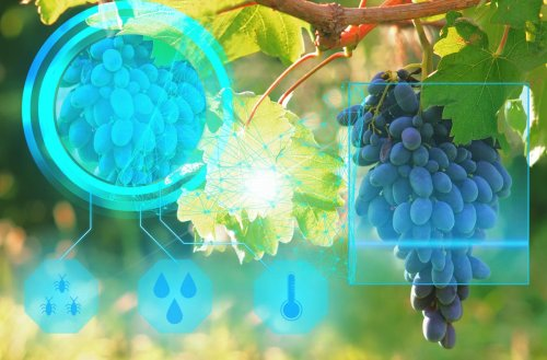 Vivino: Choose Your Next Great Wine With Big Data And Artificial Intelligence