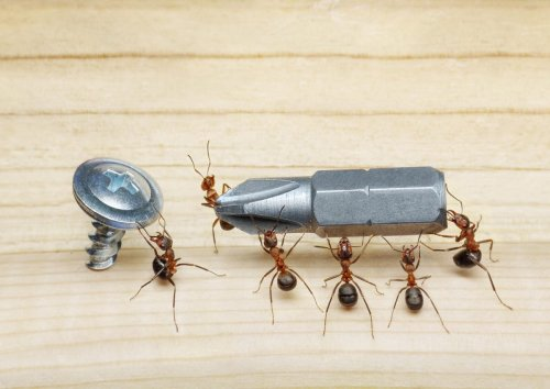 What The Human Brain And Ants Have In Common