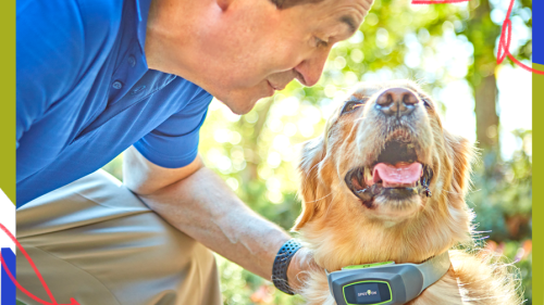 An Old Dog's New Trick: How A 70-Year-Old Entrepreneur Reinvented The Invisible Fence
