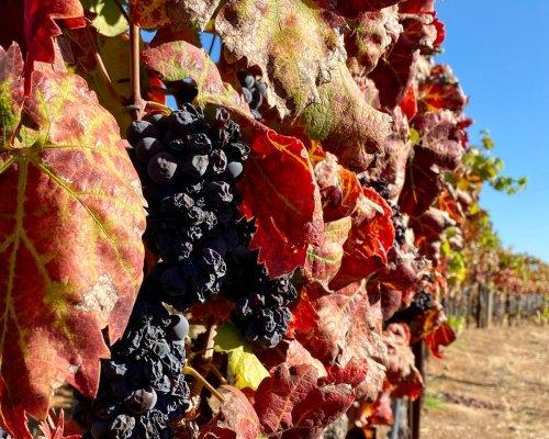 48 Hours Of Wine, Food And Hiking In Healdsburg, California