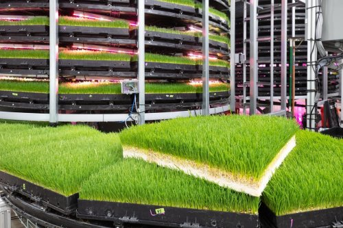 How Indoor Vertical Farms Use Big Data And Robotics To Grow Animal Feed