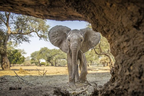 The Jury Is In: These Are The New Big 5 Animals