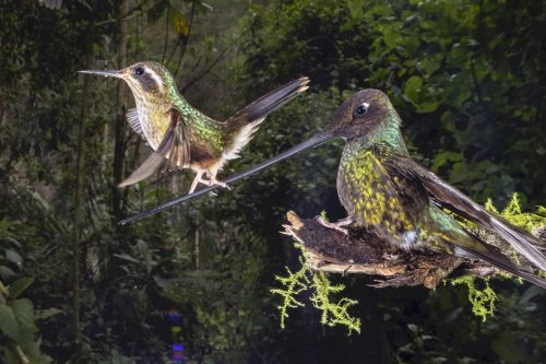 The Best Photos Of Nature: 18 Amazing Winners Of Big Picture Photography Competition