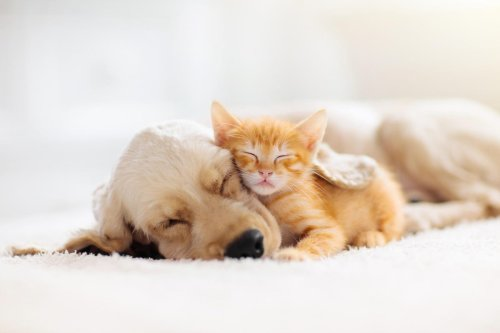 We Love Our Dogs And Cats, And Our Dogs Seem Passionately Attached To Us. (Who Knows? Our Cats Might Feel That Way, Too.)