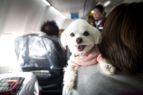 What Travelers Need To Know About New Rules For Emotional Support Animals