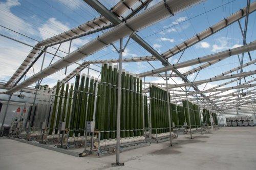 How Algae Can Help Feed The World