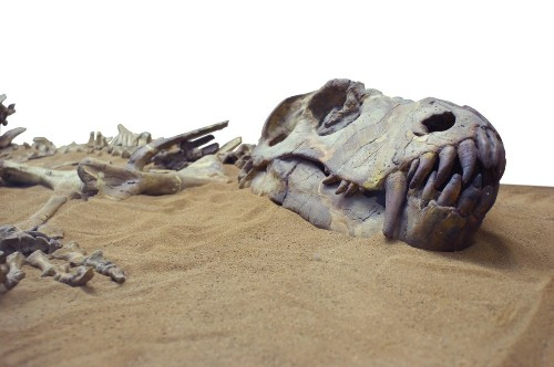 Paleontologists Find 27-Million-Year Cycle In Earth's Mass Extinctions
