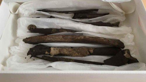 Long-Lost Viking Bones Found In Denmark Museum Basement