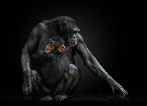 Beautiful Animals And People: 22 Prizewinning Photos From Creative Photography Awards 2021