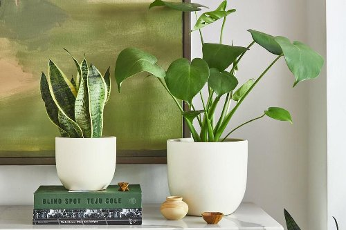The 12 Best Indoor Plants: Top Picks From Plant Experts