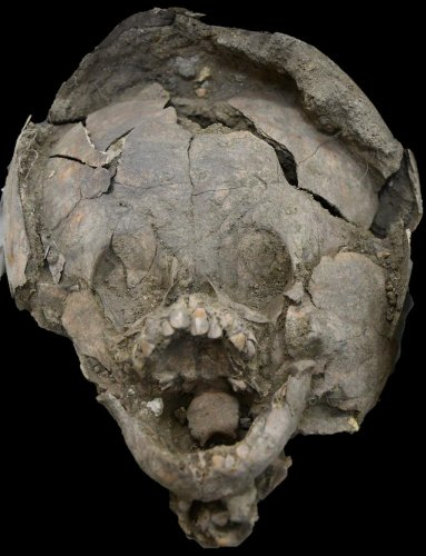 Babies In Ancient Ecuador Were Buried With Human Skull Helmets