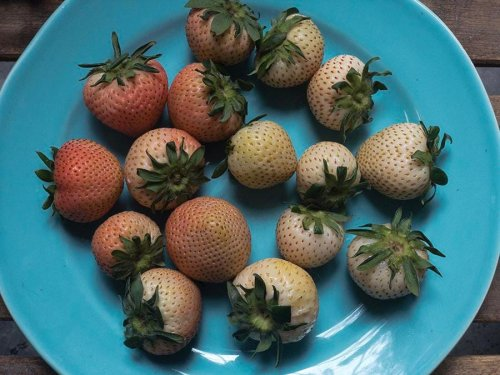 How Rose Strawberries And Other Specialty Berries Will Help Driscoll's Pull In Millions