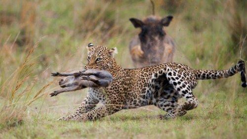 20 Extraordinary Wild Animal Photos, Winners Of International Siena Awards
