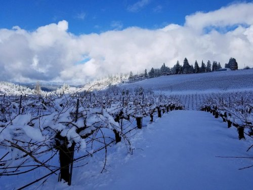 Bears In The Vineyard And Other Challenges Of Being An Emerging Wine Region In El Dorado County