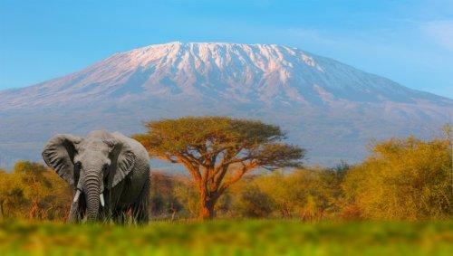 Le changement climatique fera fondre tous les glaciers d'Afrique d'ici 2040, selon l'ONU - Forbes France