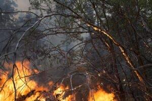 Incendio boschivo doloso a Cosenza. Concluse le indagine su un 41enne responsabile