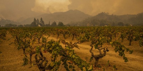 Wildfire ripping through California wine country expands as thousands flee