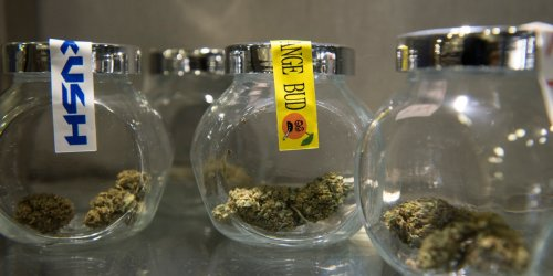 A new cannabis strain is drawing praise in the industry and scrutiny among lawmakers