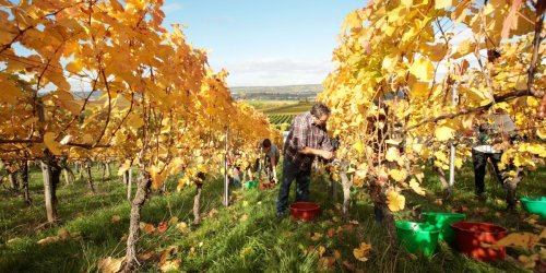Germany Might Be Producing the Best Pinot Noirs Available Today