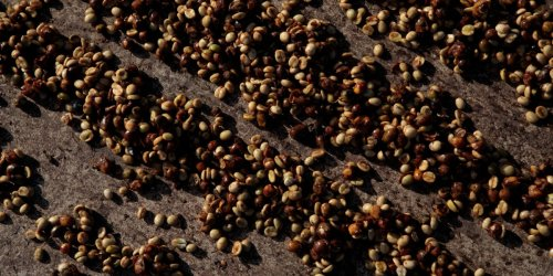 Coffee prices surge as freezing temperatures destroy Brazil's crops