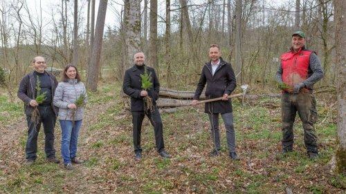 Merkur Versicherung & Waldverband Österreich pflanzen Bäume