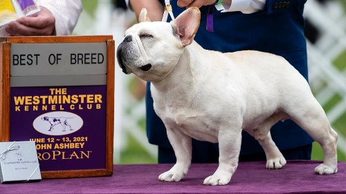 Westminster Dog Show 2021: See the best in show, group winners