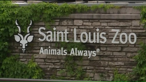 Saint Louis Zoo announces extended summer hours, events