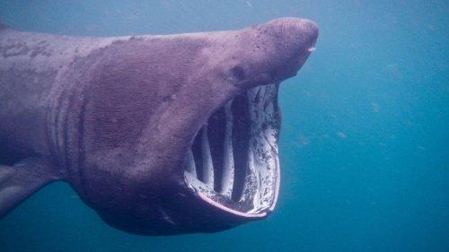 Massive shark terrifies passengers as it circles boat in the Atlantic Ocean