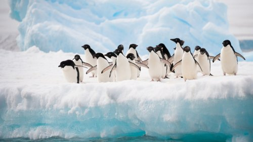Cruise line offers Antarctica wedding voyage on Valentine's Day 2022