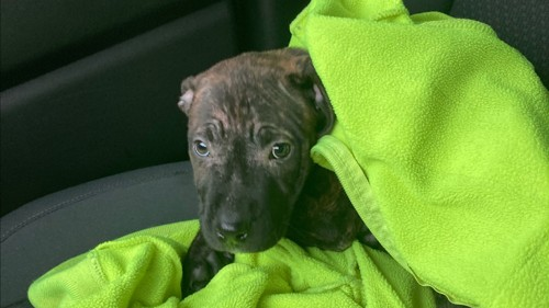 'Hero' garbage truck driver rescues puppy he found in discarded backpack