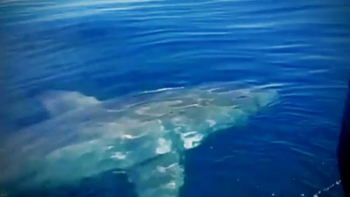 Giant great white shark caught on camera circling Florida man's boat: 'It was like a movie'