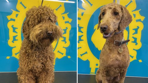 Adorable dogs finally get haircuts as businesses reopen in England