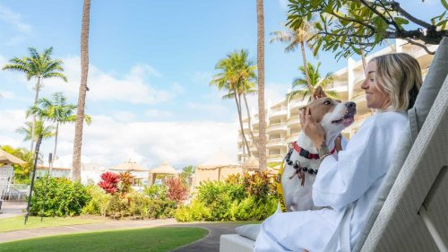 Hawaiian resorts are hosting shelter dogs that guests can win a stay with: 'Wags to Riches'