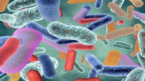 To fight coronavirus, researchers are seeking poop samples