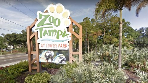 Tampa zoo animals may get COVID-19 vaccine in summer or fall, claims 'no cases' so far