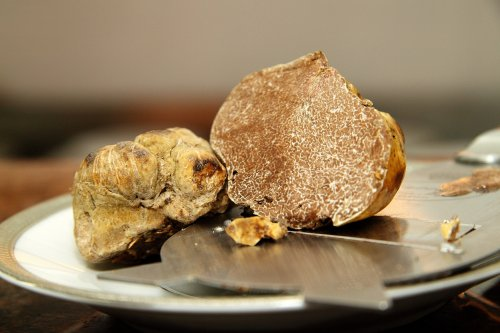 White truffle 'orchards' may help bring pricy pasta topping to the masses, French researchers say