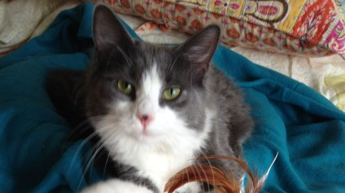 Missing cat found after an extensive 6-year search by his owner and local community