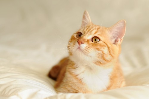 Cats recover from coronavirus faster than humans, researchers say