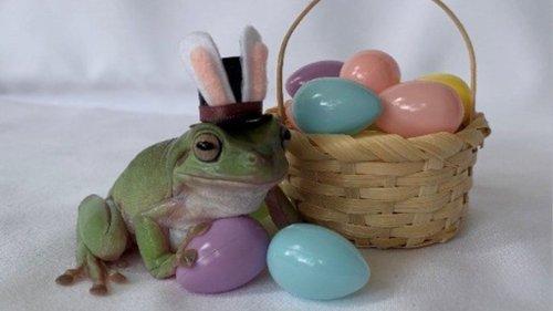 Cadbury announces 2021 'Bunny' as Betty the frog from Florida