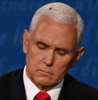 Fly lands on Pence's head during VP debate, goes viral
