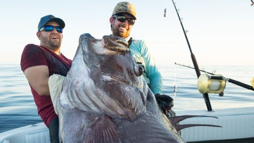 Florida fishermen catch a Warsaw Grouper that was bigger than a man: 'It was a monster'