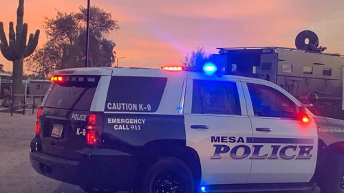 Arizona police find toddler, man and 2 dogs dead inside home: report