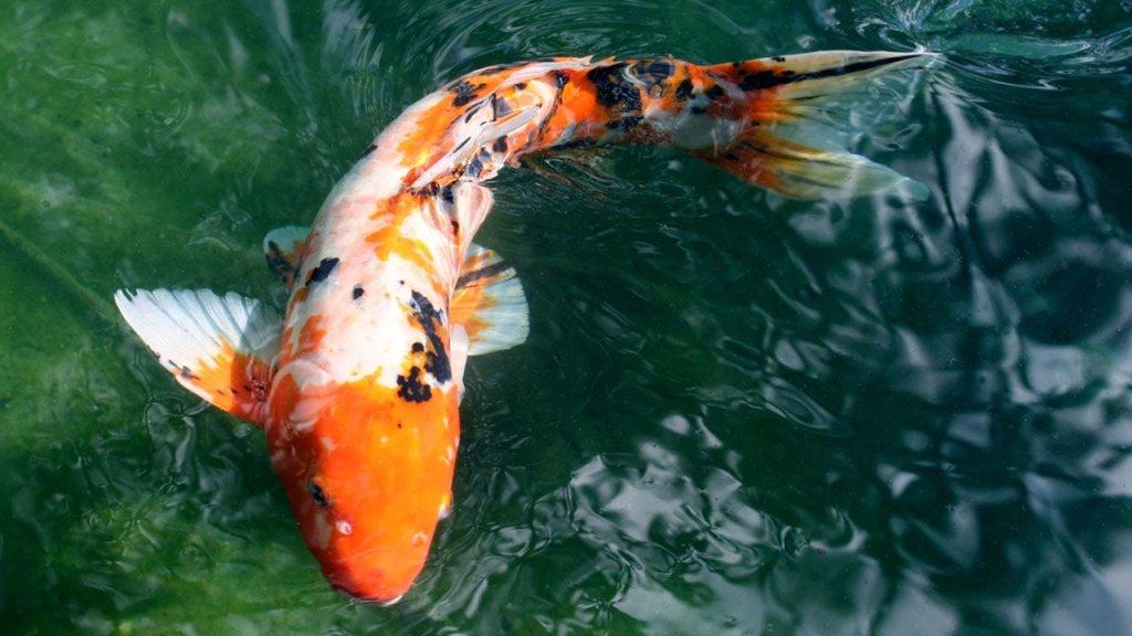 BASS FISHING/FISHING - cover
