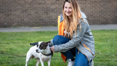 Hero dog rescues owner from knife-wielding mugger: 'My little lifesaver'