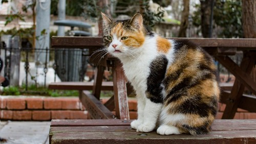 Georgia couple reunited with pet cat lost in South Korea for months