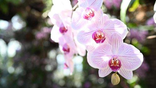 Orchideen wieder zum Blühen bringen - Diese drei Tipps helfen