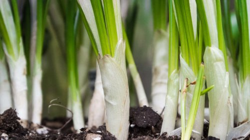 DIY-Pflanzendünger: So kann man ihn ganz einfach selbst herstellen